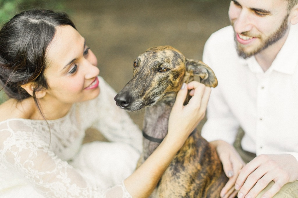 grehound-in-wedding